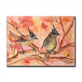 Aves Chilenas Cachidito
